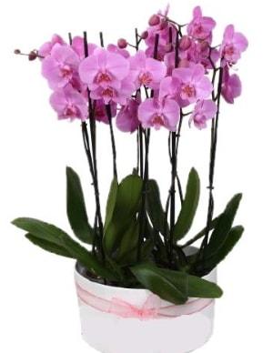 Beyaz seramik içerisinde 7 dallı mor orkide  Mersin çiçek online çiçek siparişi