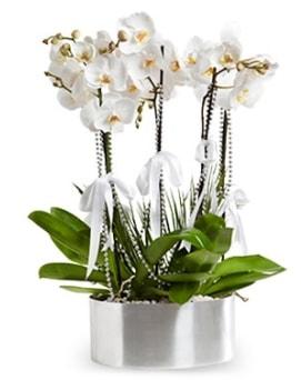 Beş dallı metal saksıda beyaz orkide  Mersin anneler günü çiçek yolla