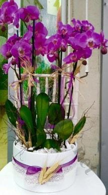 Seramik vazoda 4 dallı mor lila orkide  Mersin çiçek gönderme