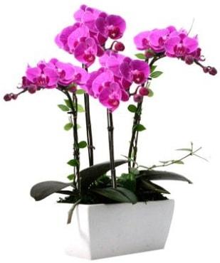 Seramik vazo içerisinde 4 dallı mor orkide  Mersin çiçek servisi , çiçekçi adresleri