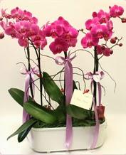 Beyaz seramik içerisinde 4 dallı orkide  Mersin kaliteli taze ve ucuz çiçekler