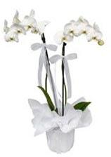 2 dallı beyaz orkide  Mersin çiçek siparişi vermek