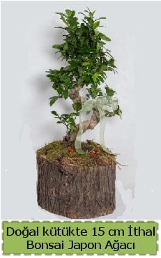 Doğal kütükte İthal bonsai japon ağacı  Mersin hediye sevgilime hediye çiçek