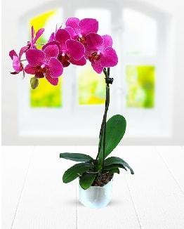 Tek dallı mor orkide  Mersin çiçek servisi , çiçekçi adresleri