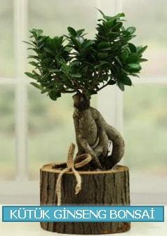 Kütük ağaç içerisinde ginseng bonsai  Mersin 14 şubat sevgililer günü çiçek