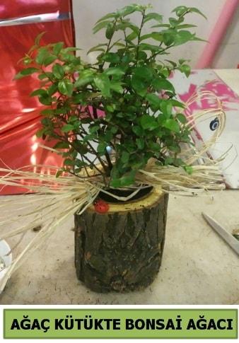 Doğal ağaç kütük içerisinde bonsai ağacı  Mersin 14 şubat sevgililer günü çiçek