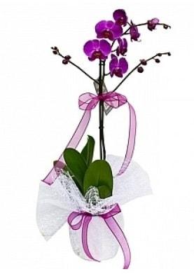 Tekli Mor Orkide  Mersin anneler günü çiçek yolla
