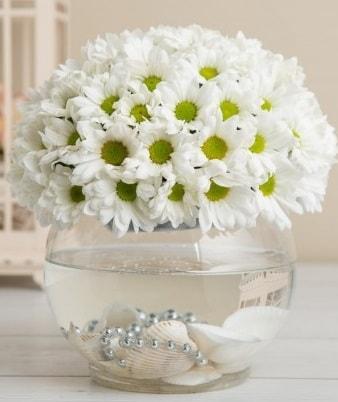 Fanusta beyaz Papatya  Mersin çiçek servisi , çiçekçi adresleri