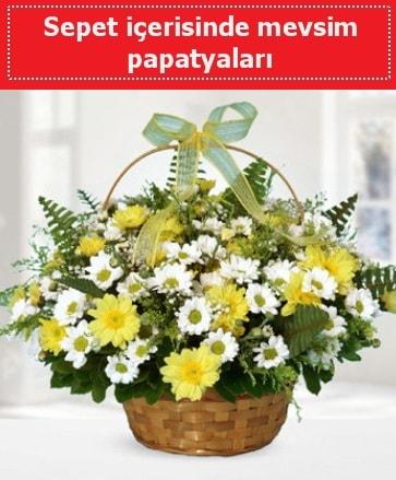 Sepet içerisinde mevsim papatyaları  Mersin kaliteli taze ve ucuz çiçekler